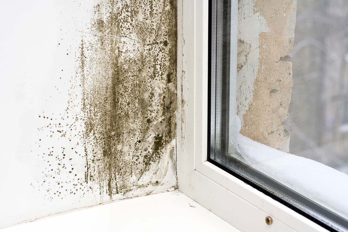 signs of mold damage in wall