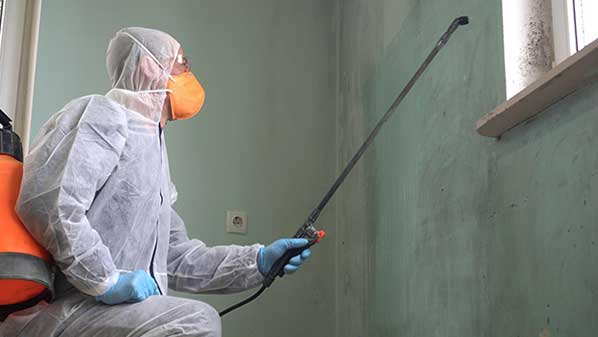 technician spraying for mold prevention